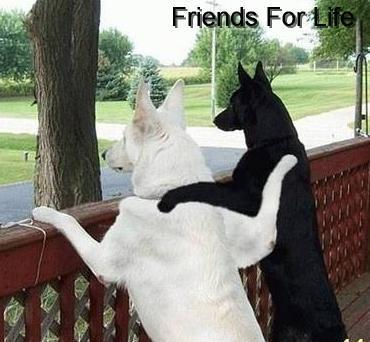 friends for life