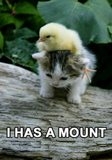 kitten and baby chicken