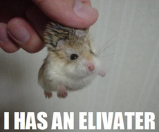hamster has an elevator