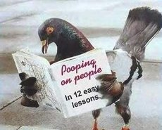 pigeon reading book pooping on people