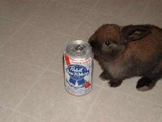 bunny rabbit wants beer