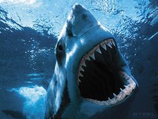shark with sharp teeth