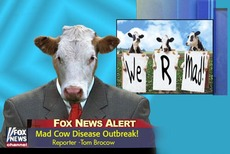 mad cow disease outbreak cows on news