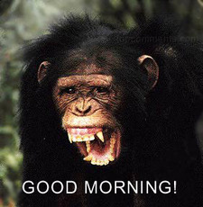 good morning monkey