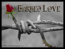 barbed love
