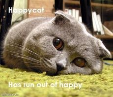 happy cat has run out of happy