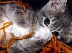 kitten and yarn