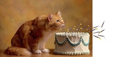 cat blows out birthday candles