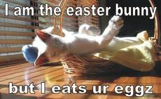 i am the easter bunny but i eat your eggs