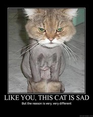 like you this cat is sad but the reason is very very different