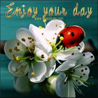 enjoy your day