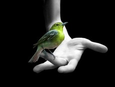 canary bird on finger