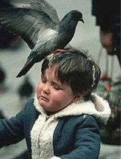 pigeon poops on boys head