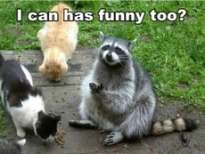 cats and raccoon