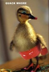 baby duck is a quack whore