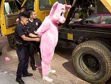 pig gets arrested by police