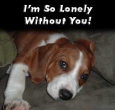 i'm so lonely without you