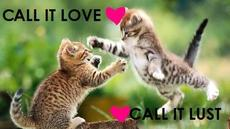 call it love call it lust kittens