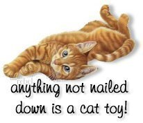 anything not nailed down is a cat toy
