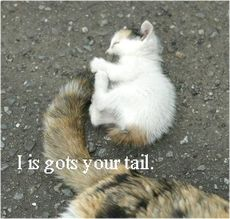 i got your tail