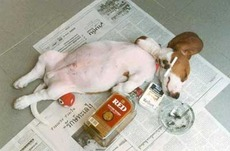 drunk dog passed out