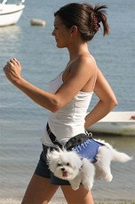 jogger with dog