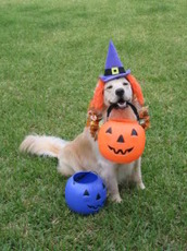 dog trick or treating
