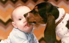 dog licking baby